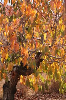 Деревья судьбы_31