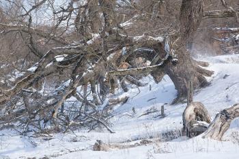 Деревья судьбы_51
