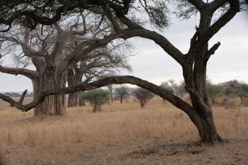 Деревья судьбы_62