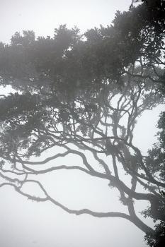 Деревья судьбы_88